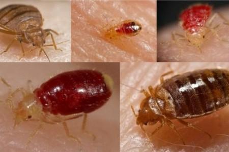Кровососущие насекомые на коже