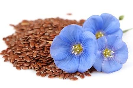 Цветы и зерна лена