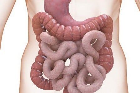 паразиты желудочно кишечном тракте человека
