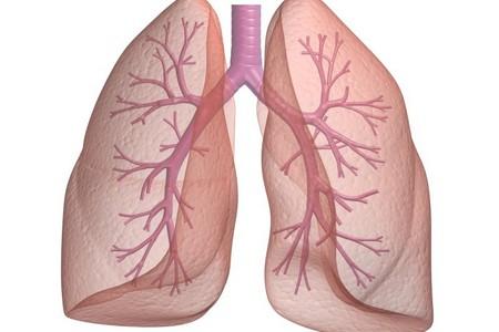 Паразити в легенях людини: симптоми і лікування » журнал здоров'я iHealth
