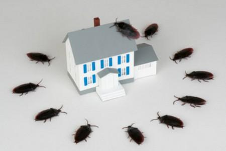 Дом окруженный тараканами
