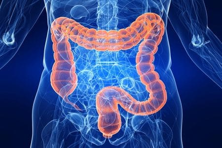 схема толстого кишечника человека