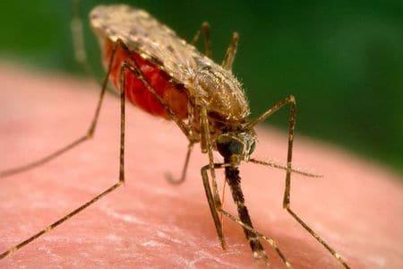 Механизм передачи малярии