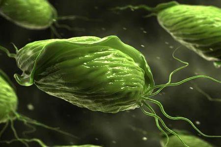 трихомонады под микроскопом