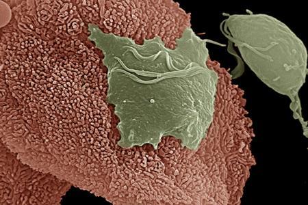 Клетки, бактерии