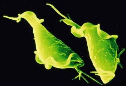зеленая бактерия