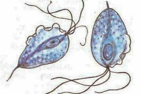Рисунок клеток